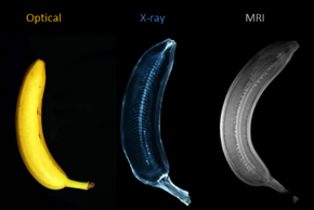 The MRILab will participate in fast imaging for the food industry